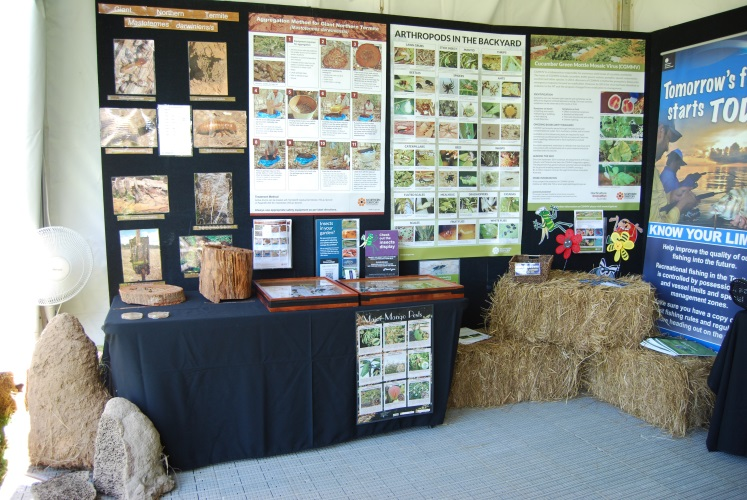 The insect display, featuring termite mounds, attracted a lot of attention