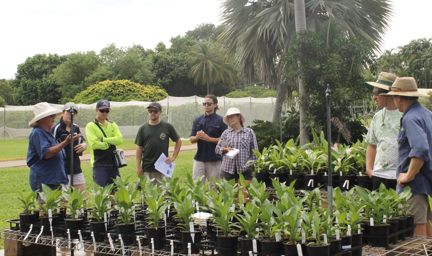 Figure 2: Heather Wallace (first from left) shared the on-going nutrition studies on curcuma under nursery conditions