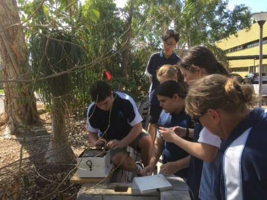 Students learning about native stingless bee hives.