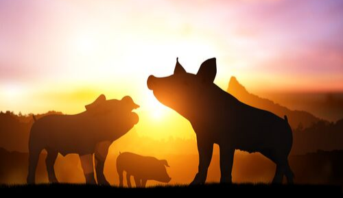 Biosecurity alert: African Swine Fever