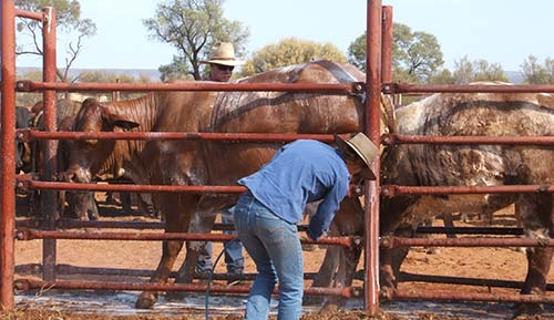 Cattle tick zones change