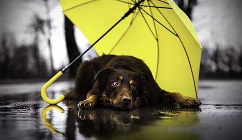 Prepare your pets for the wet season