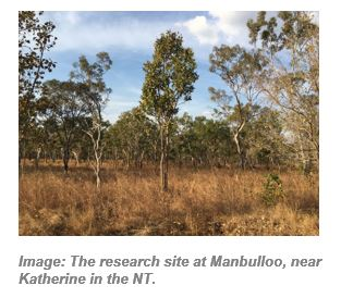 Image: The research site at Manbulloo, near Katherine in the NT.