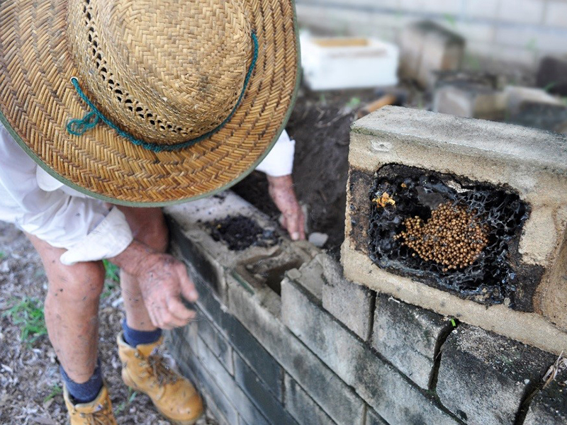 Figure 3. DPIR staff removing a native stingless bee hive from a brick wall.