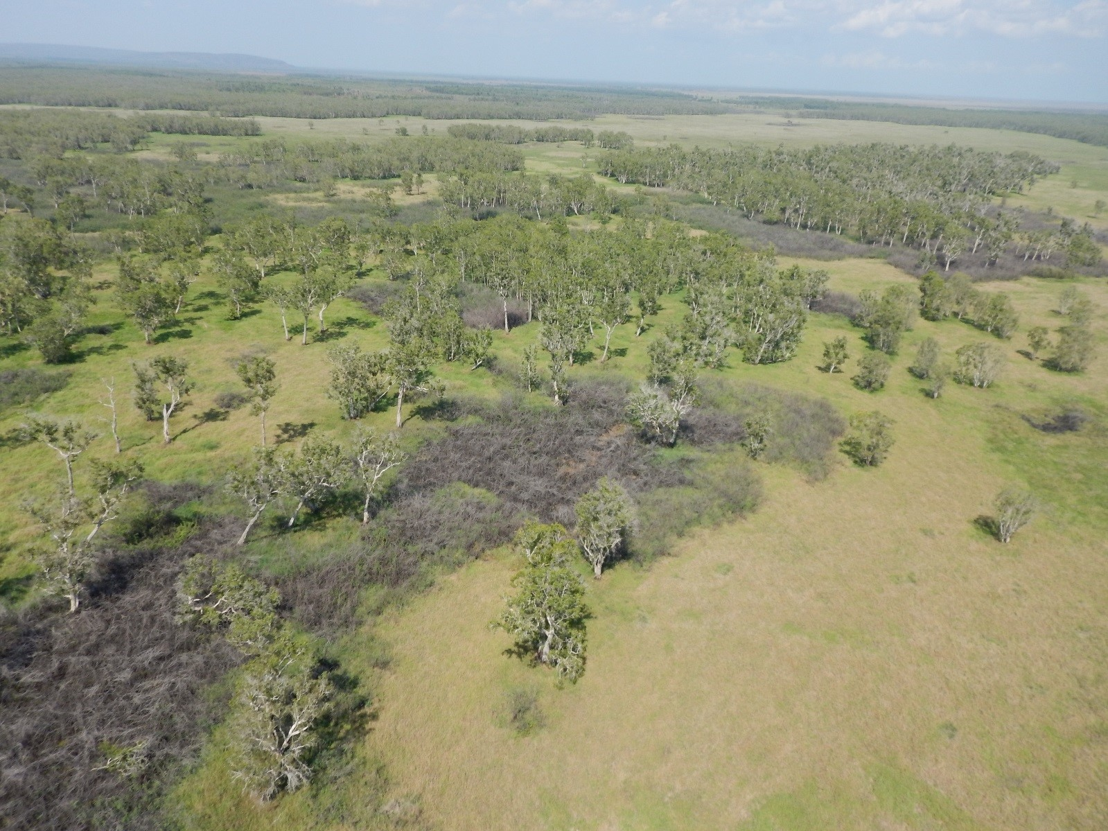 An aerial view of the Finniss area floodplains, one year after spraying for Mimosa pigra
