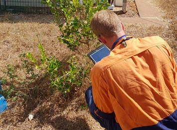 A citrus canker surveillance officer checks a citrus plant
