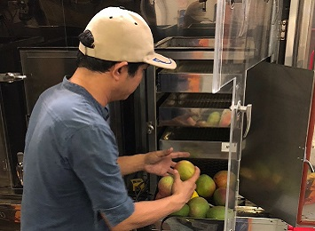 New mango varieties tested for disinfestation treatment