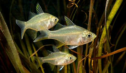 Collaboration results in the discovery of a new fish record