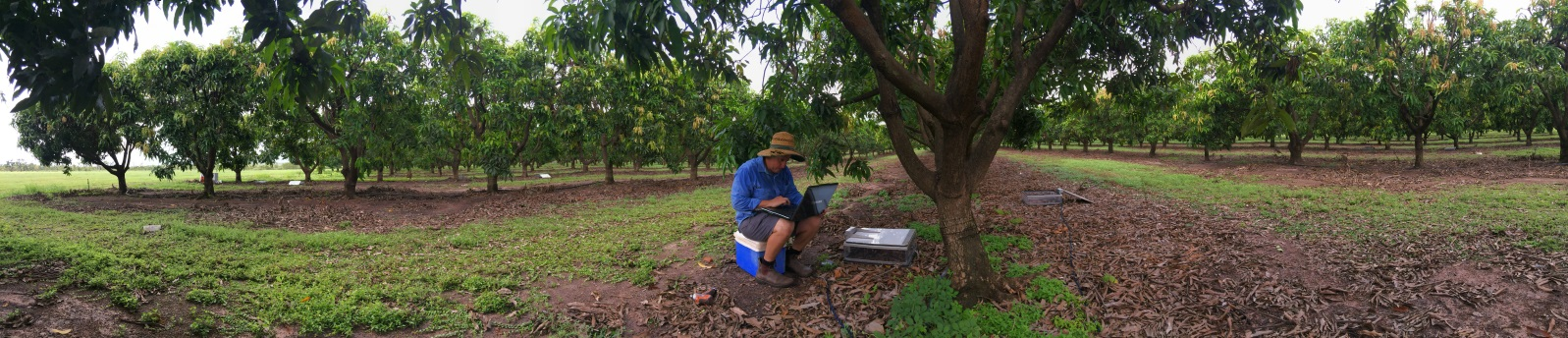 Panoramic view of Alan Niscioli programming semi-automatic soil gas sampling chambers at a Darwin mango orchard