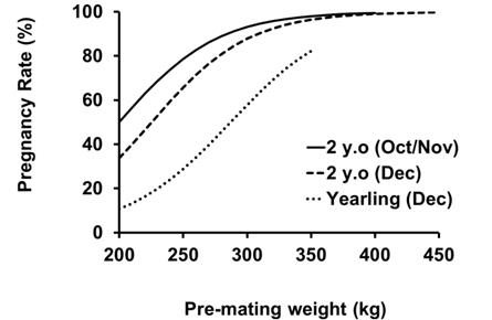 Figure 1 - The effect of pre-mating weight on pregnancy rate in maiden Brahman heifers