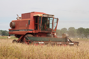 Dave Hancock harvesting soybeans at KRS