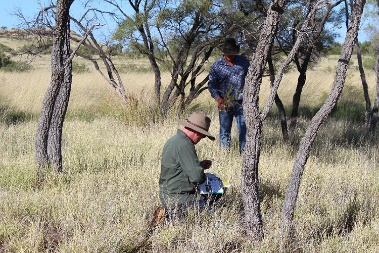 Figure 2: Not all classrooms are indoors. Trevor Dineen (Helen Springs) and Jack Veenbaas (Phillip Creek) identifying pasture species at the Helen Springs RMC
