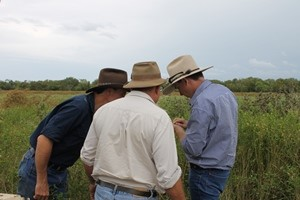Are the seeds mature? DPIR's Callen Thompson (right) working with Rhys Arnott and Chris Whatley at the Roper River Landcare Group meeting in early April.