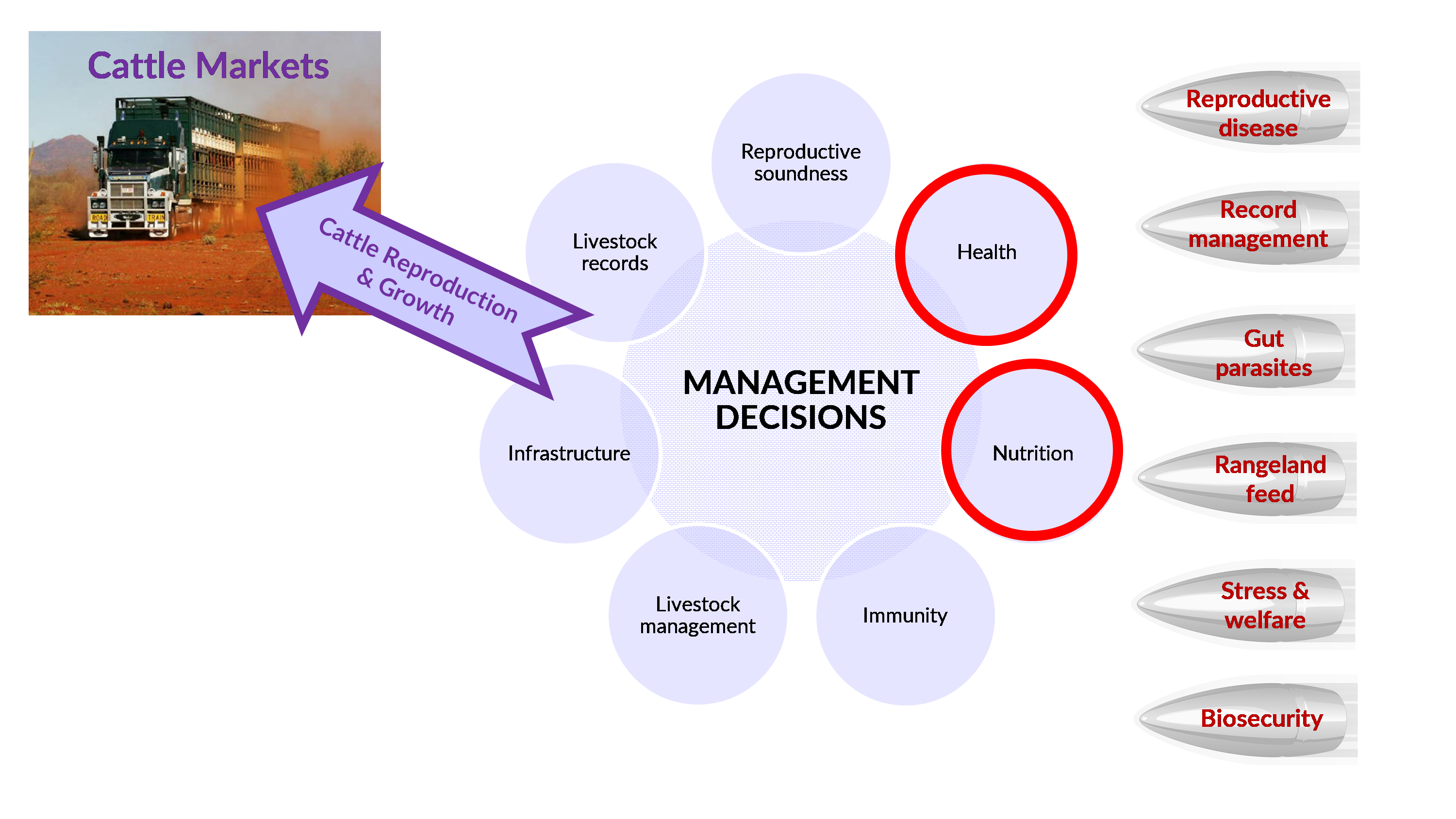 Figure 1. Integration of management decisions is required to optimise reproduction and growth of cattle for markets.