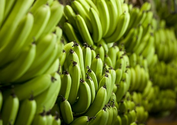 Northern Territory goes bananas!