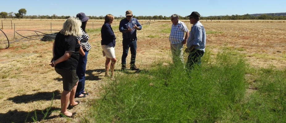 Some of the Horticultural Producers of Central Australia at the AZRI asparagus block