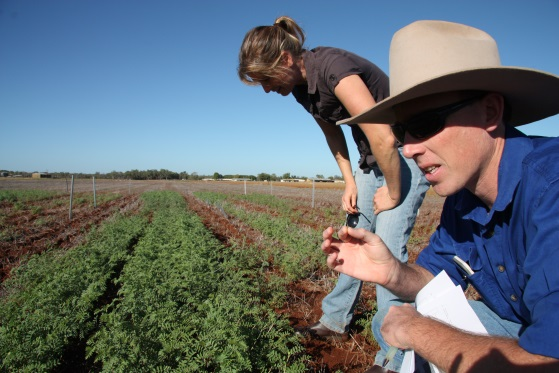 Callen and Kae checking the chickpeas for insect  damage