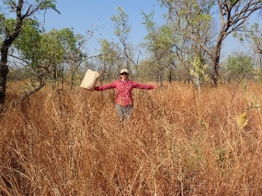 Researcher standing in a field at Victoria River, with attractant food.