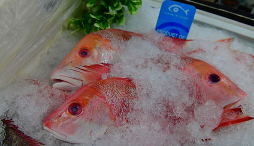 snapper fish on ice in a shop