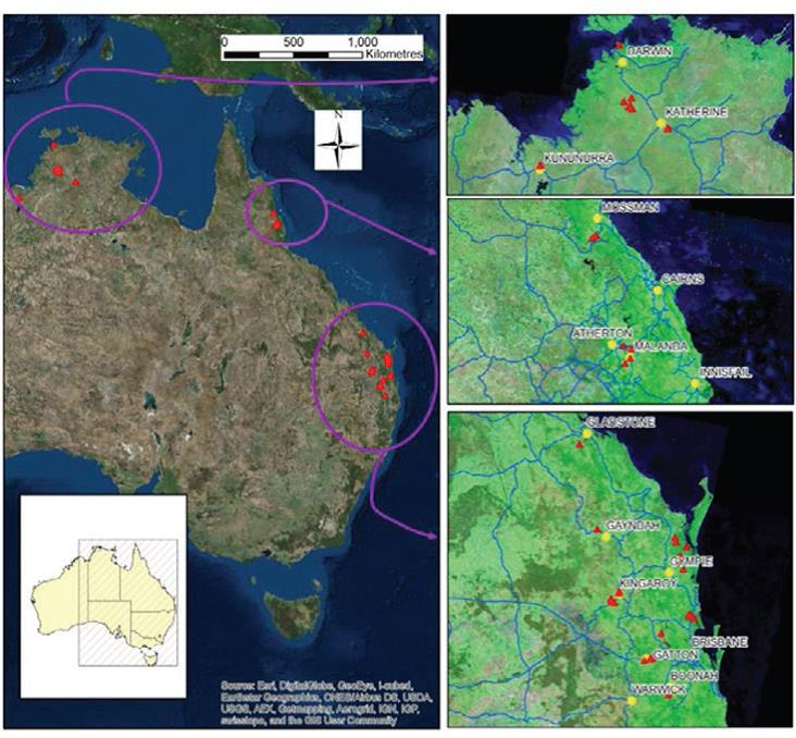 The regions sampled for the project included savanna areas in the NT and in Kununurra in WA, mixed species rainforest plantings in north QLD, spotted gum forest inland from the Burnett region, and pine forest in the coastal lowlands of QLD