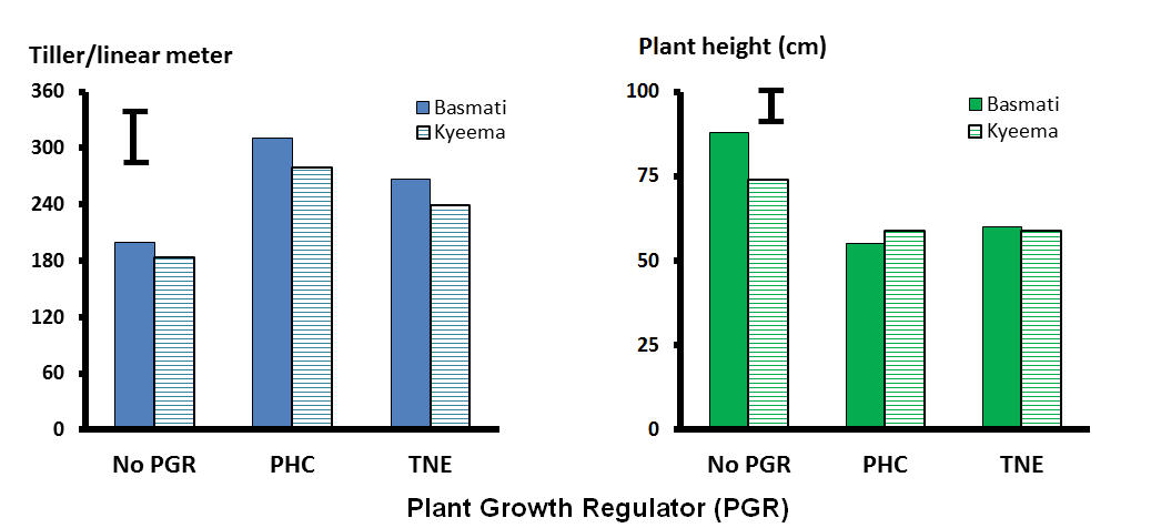 Figure 1. Plant population (tiller number per linear meter) and height (cm) of aromatic rice cultivars 30 days after last application of PGR prohexadione-calcium (PHC) and trinexapac-ethyl (TNE) at Tortilla Flats, Northern Territory, 2016. Bars indicate L