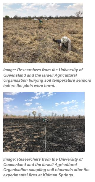 Researchers from the University of Queensland and the Israeli Agricultural Organisation burying soil temperature sensors before the plots were burnt.