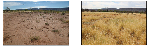 The photo on the left is from 2006 and the photo on the right is from 2014. These years had similar rainfall (close to the median of 240mm) but improved land condition led to an increased pasture response in 2014. Spelling during the 2010-2011 La Niña event was the catalyst for the land condition improvement. Photos: C. Materne.