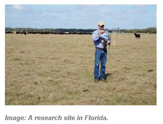 A big flat paddock in Florida