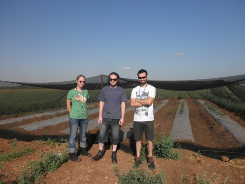 Figure 1: Plant pathologists (from left) Nadine Kruz Sharl Mintoff and David Lovelock visit one of their field trials