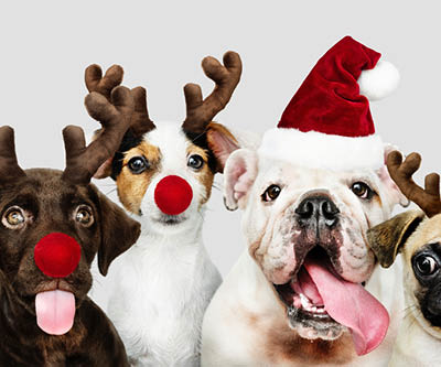 Dogs wearing Christmas hats and antlers
