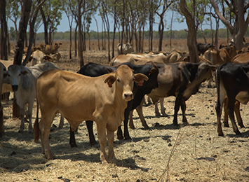 System to monitor cattle from space ready to be commercialised