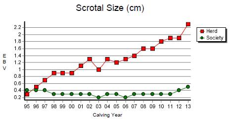 Graph: Scrotal Size