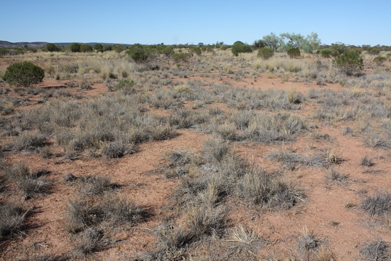 2013 photo of monitoring site in calcareous country, No 1 Paddock (photo courtesy of Chris Materne, DPIR)